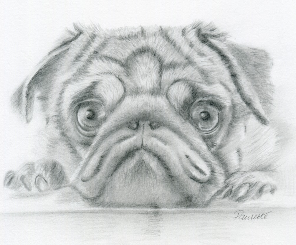 That Pug Look