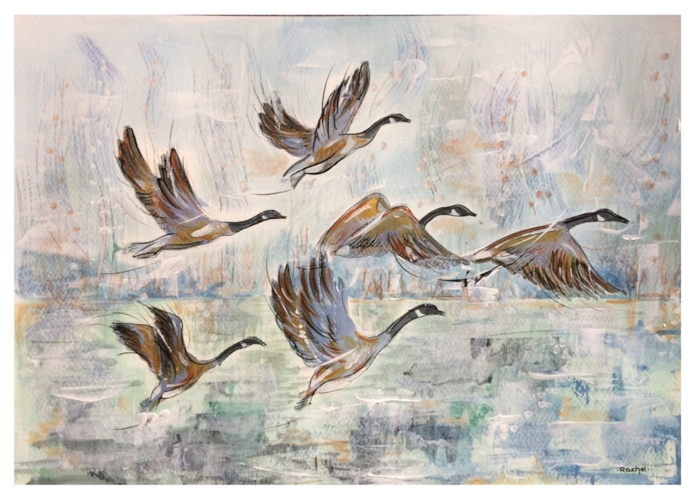 Those Geese Again