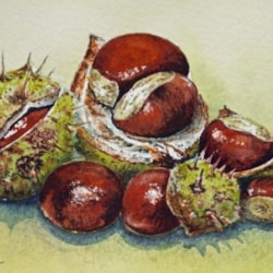 Any one for conkers