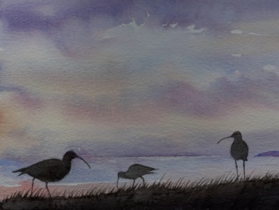 Curlews by the shore at dawn