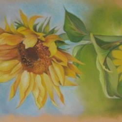 Sunflower Summer 2,