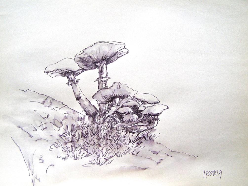 Fungi 3