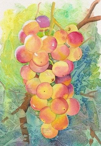 Fruit of the vine.