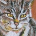 Cat 2 Miniature