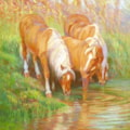 Haflinger ponies, Oxnead