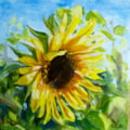 Next door's sunflower