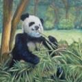 The Panda's Picnic