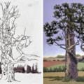 September Oak Tree, Sherwood Forest
