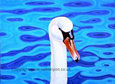 Mute Swan Birnie Loch
