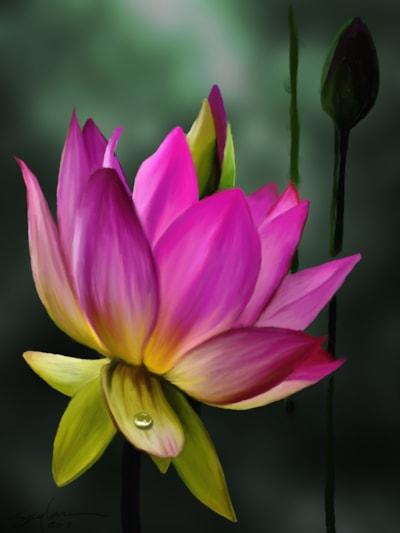 Lotus II