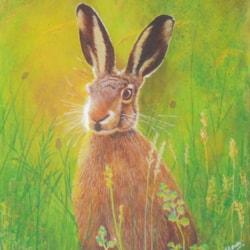 343 - Hare