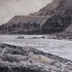 Seals at Ravenscar
