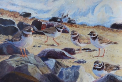 """Ringed Plovers at high tide - acrylic 14x10"""""""