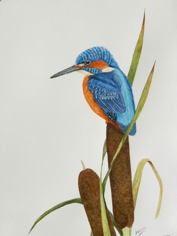 Kingfisher on a bullrush