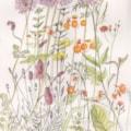 June flower border