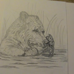 Fishing Bear - Grizzly