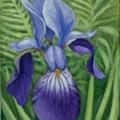 Iris in bracken