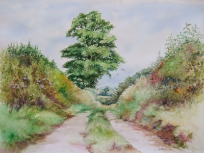 High Summer Hedgerows