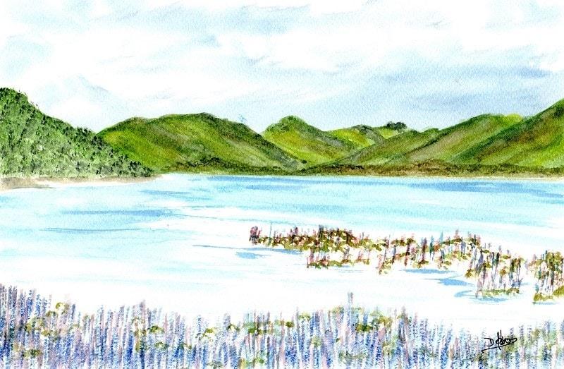 Lake Tekapo Lupins