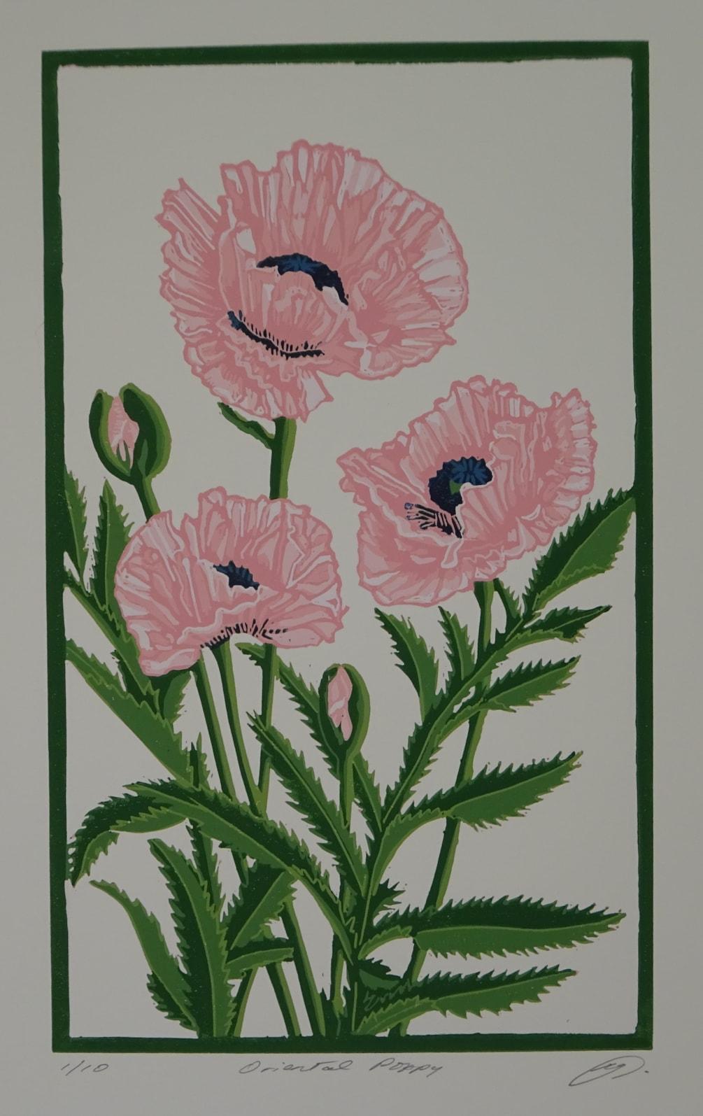 Oriental poppy - pink