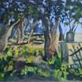 Tiny Olive Grove in Sunshine