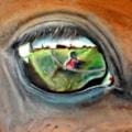 horses eye close up