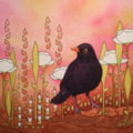 Blackbird in Meadow