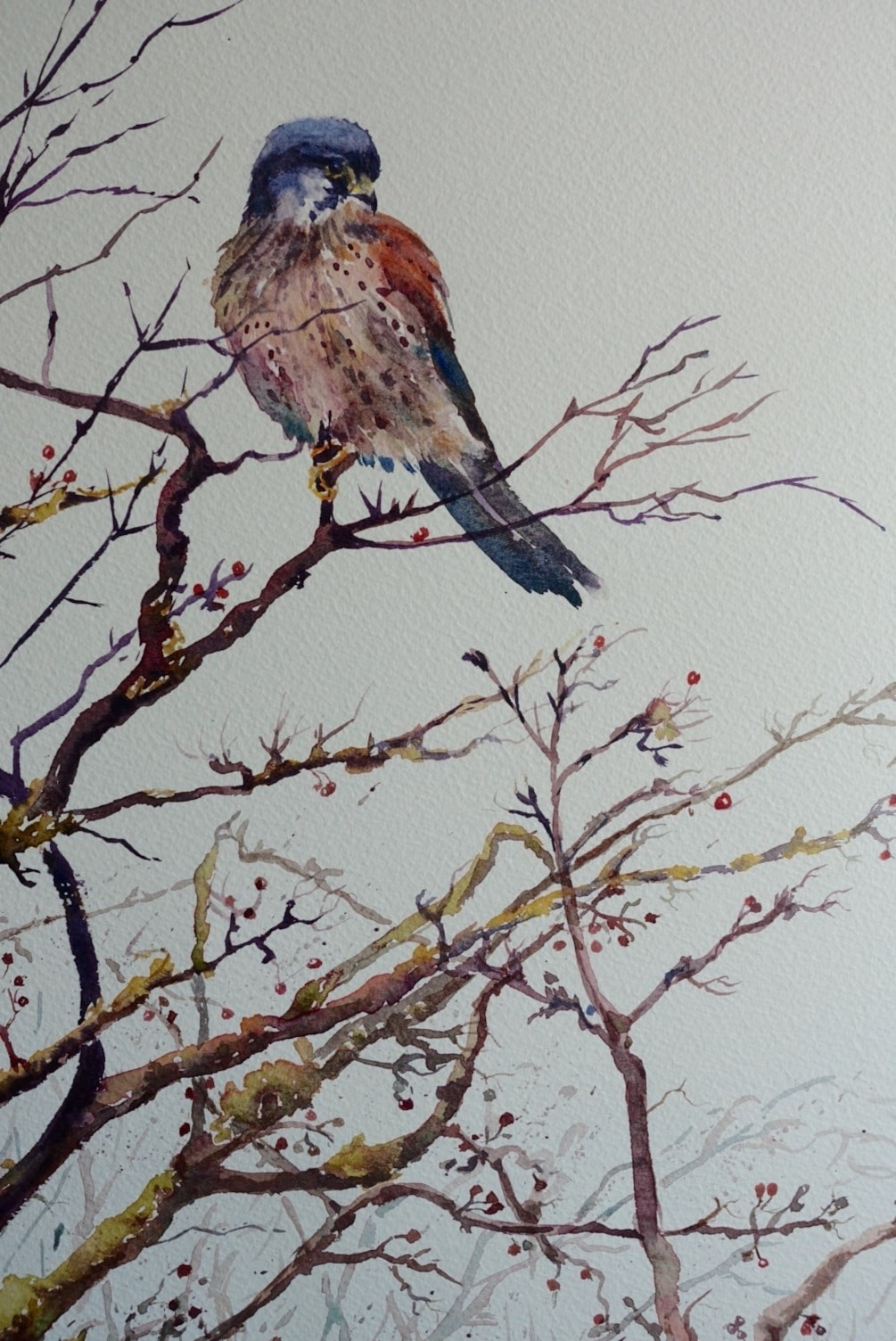 "Happy New Year (Kestrel at Saltholme, 16""x12"" watercolour on rough)"