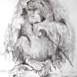 Female orangutan in the rain