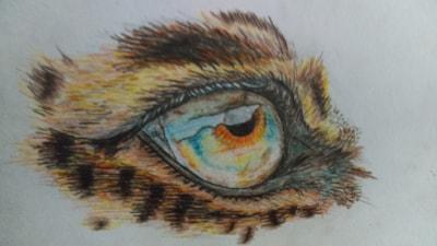 Leopards eye