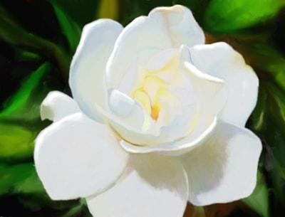 Gardenia Glow