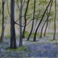 Bluebell Woods - Nuffield Woods