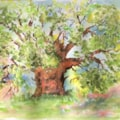 The Major Oak  Sherwood Forest