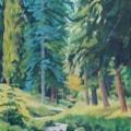 Blue Pine Gragside.
