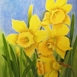 Daffs for Val