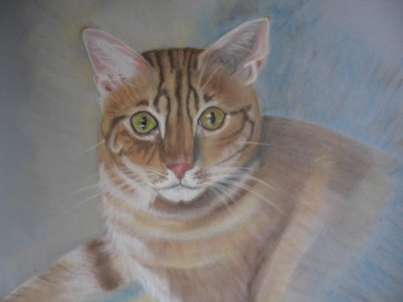 Pet's Portrait