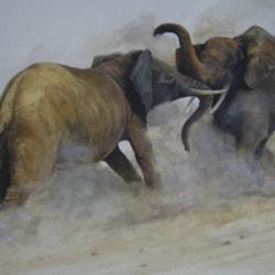 (Elephants) Fighting in the dust