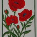 Oriental poppy - red