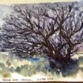 A windworn tree in Cornwall
