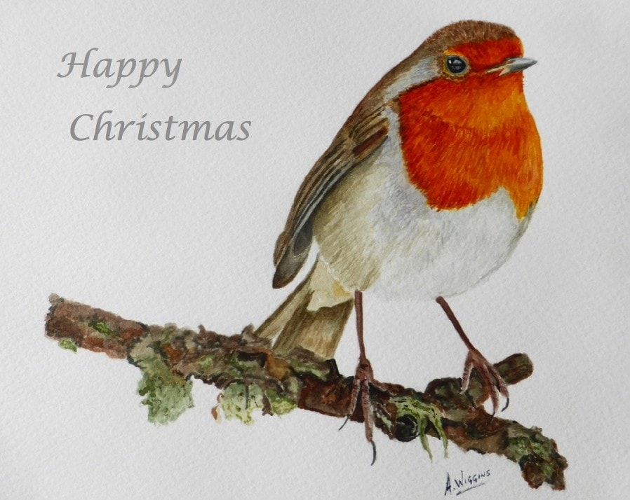 Happy Christmas Robin.
