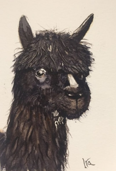 Alpaca from Wales