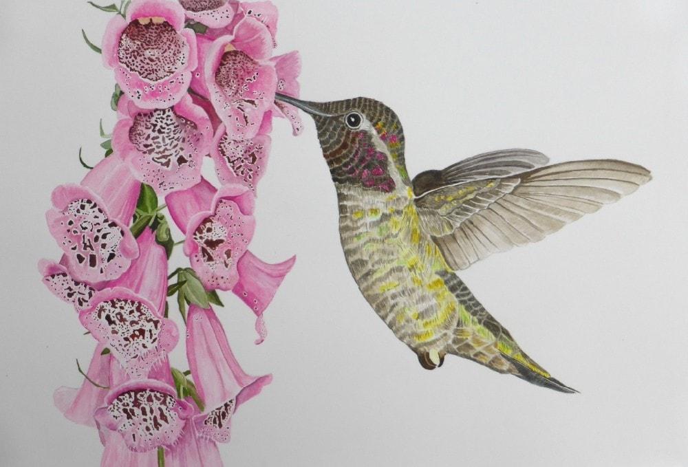 Foxglove and Hummingbird.
