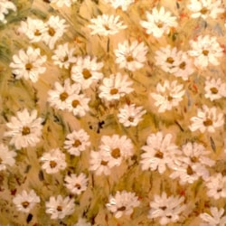 'The daisy patch'