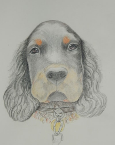 BOO---   A SPANIEL PUPPY OF 10 MONTHS OLD