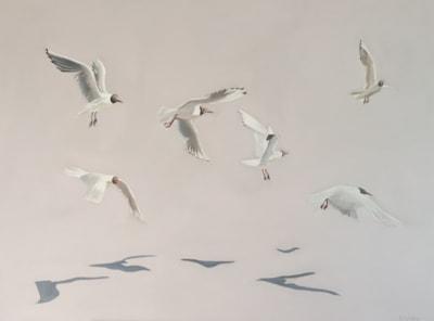 Swooping Gulls