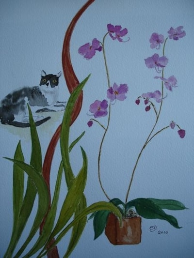 Cat and Pink Orchid