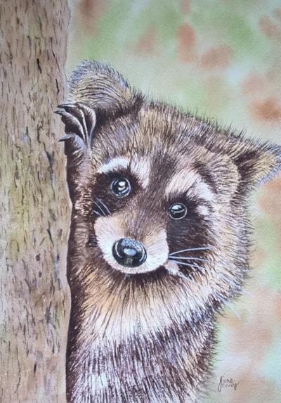 cheeky raccoon