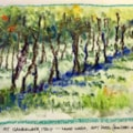 The vineyard at Gambellara near Vicenza, Italy