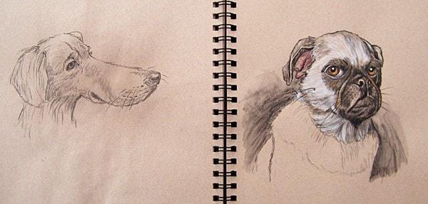 Dogs- A4 sketchbook- watercolour pencils