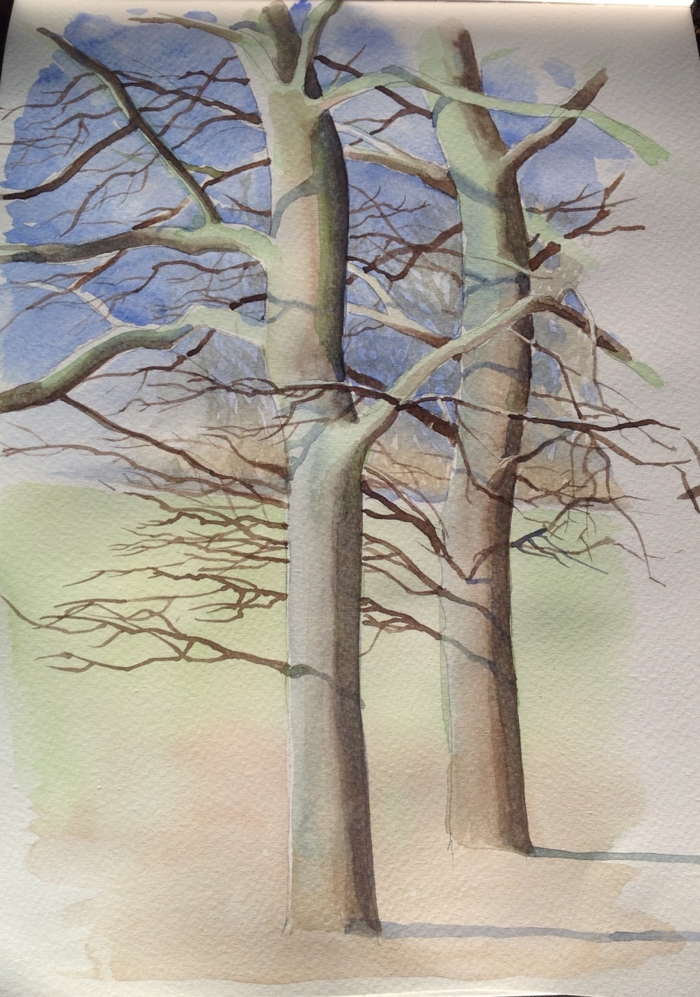 Oak Trees on a Winters Day